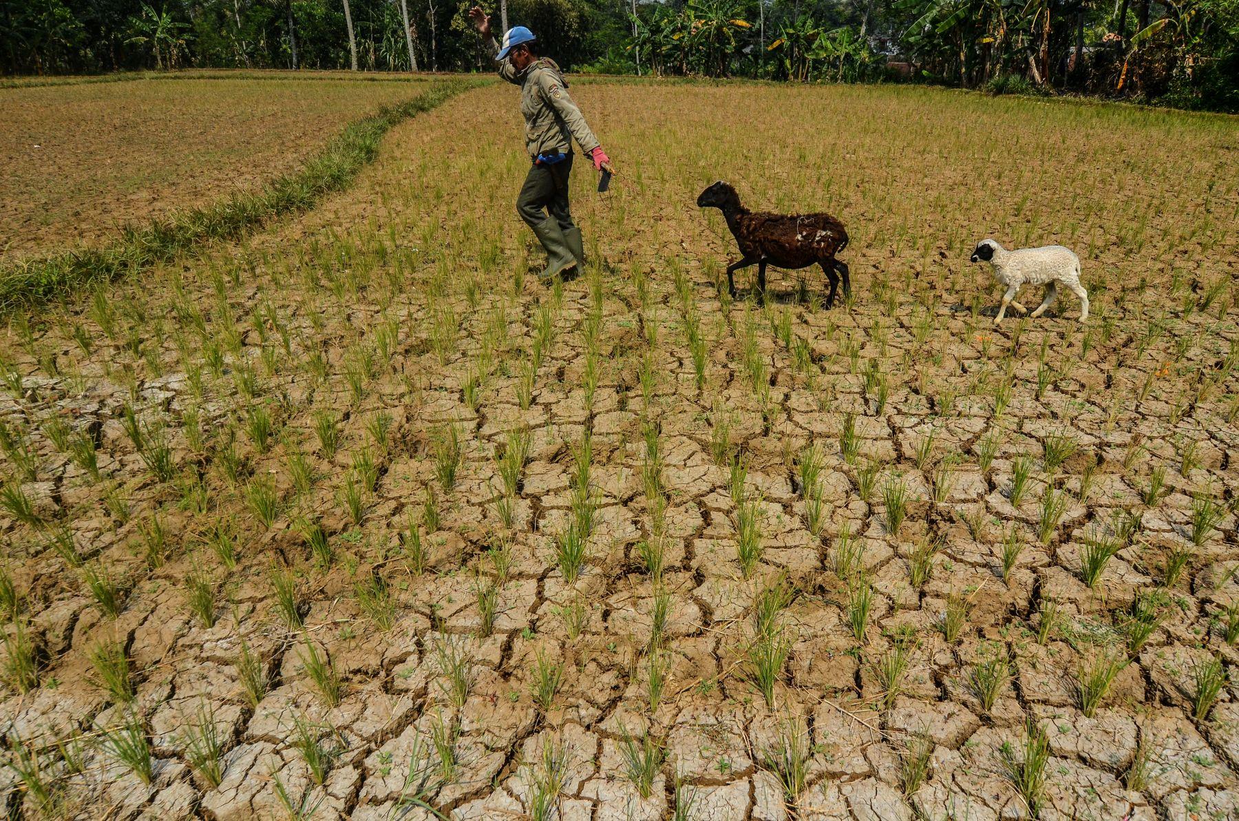 Perubahan Iklim dan Proletarisasi Rakyat Agraris
